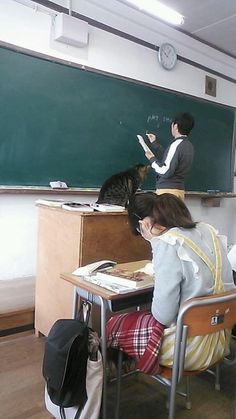 Cat of the classroom Cute Cats, Funny Cats, Funny Animals, Cute Animals, Aesthetic Japan, Japanese Aesthetic, Japanese Memes, Dance Kpop, Cat Enclosure