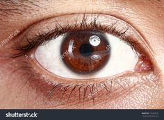 Eye drops for vision correction, corneal implants, new treatments for macular degeneration and amblyopia among many exciting ophthalmic developments in Israel. Eyesight Problems, Iris Eye, Genetics Traits, Eye Facts, Stem Cell Research, Laser Surgery, The Retina, Regenerative Medicine, Eye Drops