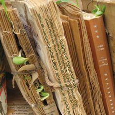 Voici une liste de Livres au format PDF, réputés dans l'univers de la Permaculture pour la qualité de leur contenu. Leurs auteurs, Bill Mollison, David Holmgreen Mansobu Fukuoka... défendent et promeuvent une agriculture naturelle, plus saine et plus respectueuse des lois de la nature. Sur un a