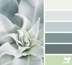 Succulent Tones - https://www.design-seeds.com/in-nature/succulents/succulent-tones-5