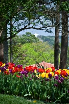 Eureka Springs, AR - Crescent Hotel gardens with Christ of the Ozarks statue in the distance Eureka Springs Hotels, Eureka Springs Arkansas, Beautiful Flowers Pictures, Flower Pictures, New Orleans Hotels, Victorian Buildings, Spring Vacation, Ghost Tour, Hot Springs