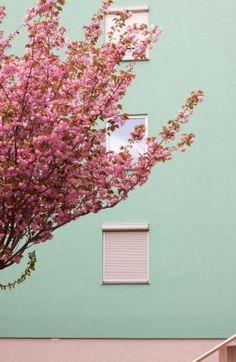 pianta fiorita su muro celeste #aprile su casa al 21
