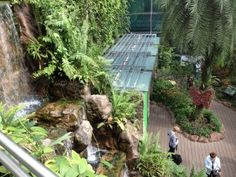 singapore changi airport green wall - Google Search
