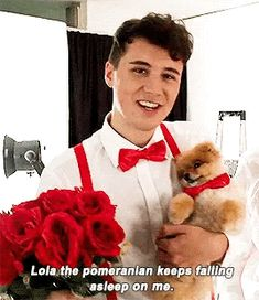 """lola the pomeranian keeps falling asleep on me"" -dan in ""Dan and Phil and DOGS!""<<Dan looks hella cute though"
