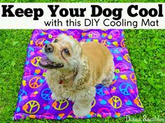 DIY Dog Cooling Mat Sewing Tutorial - Need to keep your dog cooled off? Here is a DIY Dog Cooling Mat Tutorial that will keep your pooch cool while outside with the family. This pet cooling pad requires only basic sewing skills. It's a great outdoor pet b Pet Cooling Pad, Jack Russel, Dog Training Classes, Cool Dog Beds, Animal Projects, Dog Accessories, Dog Care, Dog Toys, Cute Dogs