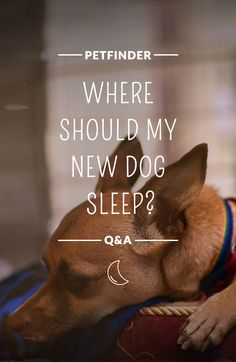 We all need a good night's sleep. If you plan on crate training your dog, make sure the crate area is set up before welcoming him or her to their new home. Leave the crate open so that they can go in to get away in case they get overwhelmed.