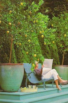 Outdoor Rooms, Outdoor Gardens, Outdoor Living, Meyer Lemon Tree, Plantas Indoor, Fruit Trees, Citrus Trees, Lemon Tree Potted, Orange Trees