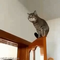 The Flying Cats Daring Leap