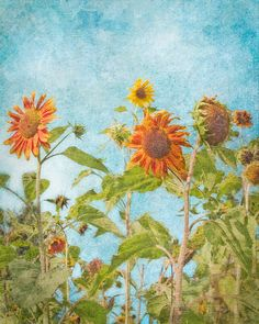 Sunflower Gathering  cyan blue  red  yellow  by FloatingLeafArts