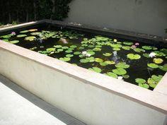 rectangular ponds - Google Search