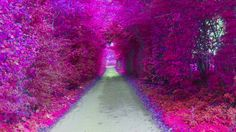 Beautiful purple path....