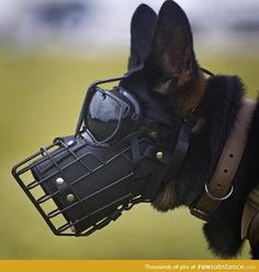 Military working dogs have been a part of our military dating back to the first World Wars. Fast forward to the current conflicts in Iraq and Afghanistan Military Working Dogs, Military Dogs, Military Photos, Police Dogs, Military Dating, Dog Muzzle, War Dogs, Belgian Malinois, Belgian Malamute