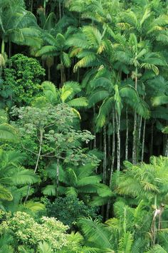 Tropical Rain Forest, Borneo, Indonesia...hoping it's still there!