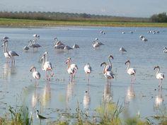 Lantejuela pone en valor sus lagunas y aves con nuevos servicios turísticos