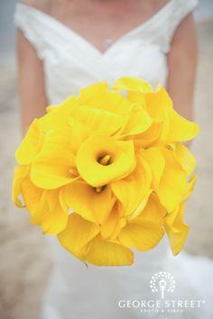 Beautiful Yellow Calla Lilies!
