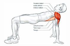 Help your body to swim longer and faster. Here is our favourite set of dryland exercises for swimmers that we usually provide to our crawl swimmers.