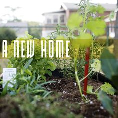 PEARL + EARL: DIY Box Garden