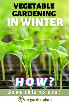 Just because winter gets near, that doesn't mean you have to go without fresh vegetables. Hydroponic gardening is the best route to go, and you can still enjoy your salads, cucumbers, and tomatoes even during winter. Save this to use and find the answers by checking mygardenplant. Container Vegetables, Planting Vegetables, Growing Vegetables, Raised Vegetable Gardens, Vegetable Gardening, Organic Gardening, Home Grown Vegetables, Organic Vegetables, Hydroponics System