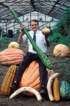 """Yeah, these """"babes"""" to feed an entire family in a year of famine. Huge pumpkin, zucchini, mushrooms and cucumbers continue to surprise even ..."""