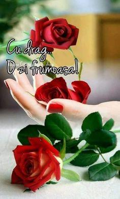 Beautiful Rose Flowers, Beautiful Moon, Amazing Flowers, Beautiful Flowers, Flowers Gif, Hand Flowers, Rose Images, Flower Images, I Love You Animation