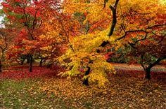 Google Image Result for http://www.goldcountryartistsgallery.com/2d/soroush-7610-AutumnPalette.jpg