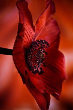 Red Flower by Stas Medvedev