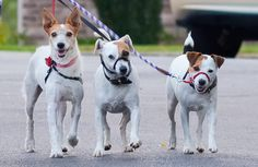 Walking the dogs? Did you know, just by downloading a free app and loading it up when you head out, you could be raising much-needed funds for the rescue? Check out these apps to get started!