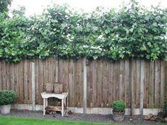 Tuin on pinterest verandas pergolas and met - Ideeen buitentuin ...