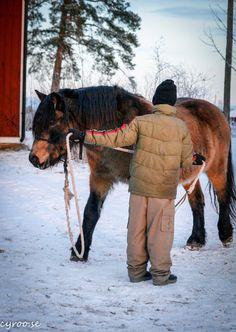 Hästis | Beridet bågskytte och Tornerspel by Dalecarlian Horse Adventures AB