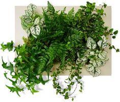 cadre végétal avec lierre, fougère, etc.