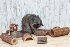 Zweckentfremdet: Intelligenzspielzeug aus Holz für deine Katze - ideal für Katzen Trockenfutter von Almo Nature - Zucker und Zimt Design Lion Sculpture, Statue, Cats, Swimming, Cat Food, Fabric Animals, Handarbeit, Timber Wood, Gatos