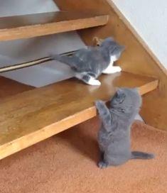 Cute Little Kittens, Cute Baby Dogs, Cute Cats And Kittens, Baby Cats, Ragdoll Kittens, Bengal Cats, White Kittens, Adorable Kittens, Kitty Cats