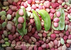 Dixie Speckled Butterpea Bush Lima Bean Seeds. Very well suited to Southern conditions; sets and bears heavy crops in hot, dry weather. Best value for single item and large quantities. Scaled pricing; price-per-unit drops as weight increases. | eBay!