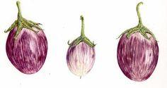 eggplant botanical art - Google Search