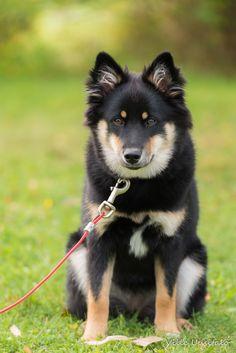 My dog 'Unna'