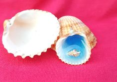 Shell Decorations, World Crafts, Sea Shells, Summer Time, Pendant, Etsy, Color, Colour, Daylight Savings Time