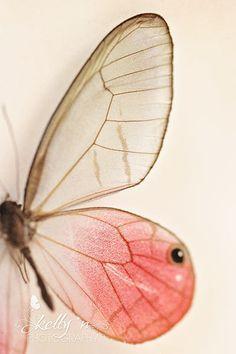 pink glasswing butterfly