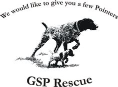 Rescue a German Shorthaired Pointer - the best!