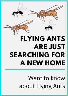 Types Of Ants, Flying Ants, Pest Control, Brisbane, New Homes, Ant Types, Bed Bugs Treatment