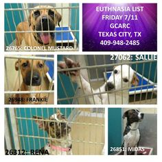 ~~EU DATE FRIDAY, JULY 11, 2014~~ PLEASE HELP!!~~UPDATE: 1 EUTH LIST ADOPTION FEE HAS BEEN SPONSORED EUTHANISIA LIST FOR FRIDAY 7/11/14 at GCARC. Please share, adopt, foster, sponsor.  Adoption fee is $85 and includes spay/neuter, rabies vaccination, and microchip.  3412 25th Ave. N/ 3412 Loop 197 North  Texas City, TX 77590  Phone: 409-948-2485 hours: Tues  Thurs noon-6, Wed and Fri noon-5, Sat 10-5 #EUTH #GCARC #galveston #texascity #dogs #adopt #foster #july11