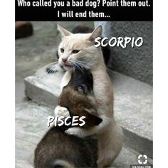 15 Best Scorpio And Pisces Relationship Images Scorpio And