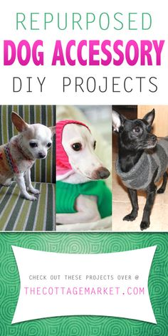 With a sweater...some inspiration and an adorable pet that needs a coat or a bed you are good to go. Check out these Repurposed Dog Accessory DIY Projects!
