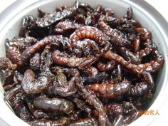 List of Edible Insects