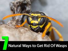 If you want to be rid of these pesky critters, try some of these natural solutions.