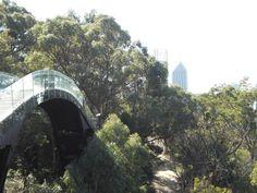 Sky Walk, King's Park