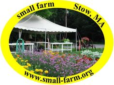 small farm, stowe, ma. Love this little farm to pick flower bunches.