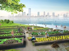 In lieu of being hauled out of state, will organic waste be turned into compost at a network of park-topped artificial islands dotting NYC's waterfront? Urban Agriculture, Urban Farming, Urban Gardening, Hydroponic Gardening, Indoor Gardening, Organic Gardening, Green Architecture, Landscape Architecture, Architecture Design