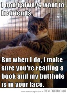 The Most Interesting Cat in the World: I don't always want to be friends. But when I do, I make sure you're reading a book and my butthole is in your face. Anyone who has a cat will know how true and funny this is! Funny Animal Pictures, Funny Animals, Cute Animals, Funniest Animals, Funny Images, I Love Cats, Cute Cats, Funny Cute, Hilarious