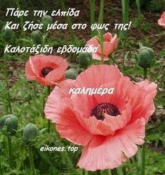 Good Morning, Plants, Inspiration, Buen Dia, Biblical Inspiration, Bonjour, Plant, Good Morning Wishes, Inspirational
