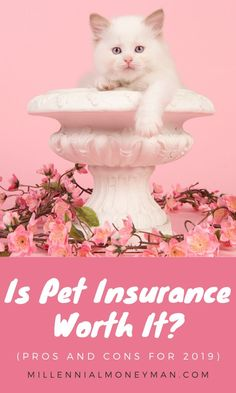 The number of people insuring their pets is growing, but is pet insurance worth it? Learn how pet insurance works, what it covers, pros and cons, and more. Ways To Save Money, Make More Money, Money Saving Tips, Pet Insurance, Health Insurance, Best Savings, 1 Live, Frugal Living Tips, Frugal Tips